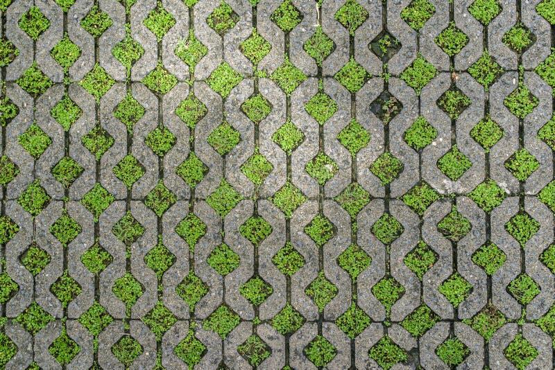De tegel van de de steenvloer van het baksteenblok met groen gras als achtergrond of t stock foto