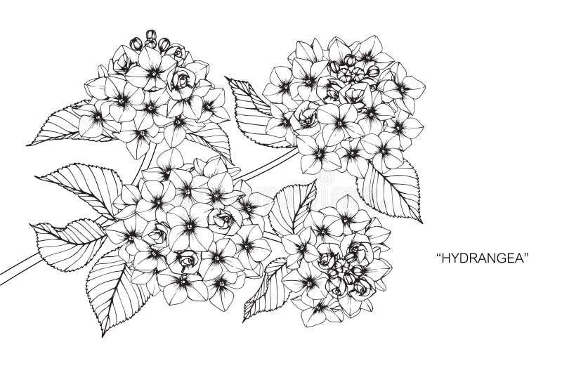 De tekening en de schets van de hydrangea hortensiabloem vector illustratie