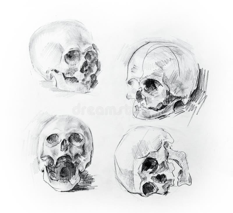 De tekening van de schedelstudie Potlood op papier royalty-vrije stock afbeeldingen