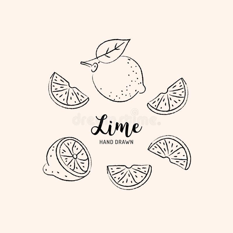 De tekening van het kalkfruit, Half en Plak van Citroen Schets van kalk op een witte achtergrond Vector illustratie stock illustratie