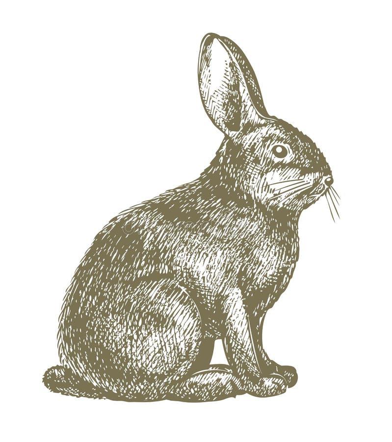 De tekening van het konijn royalty-vrije illustratie