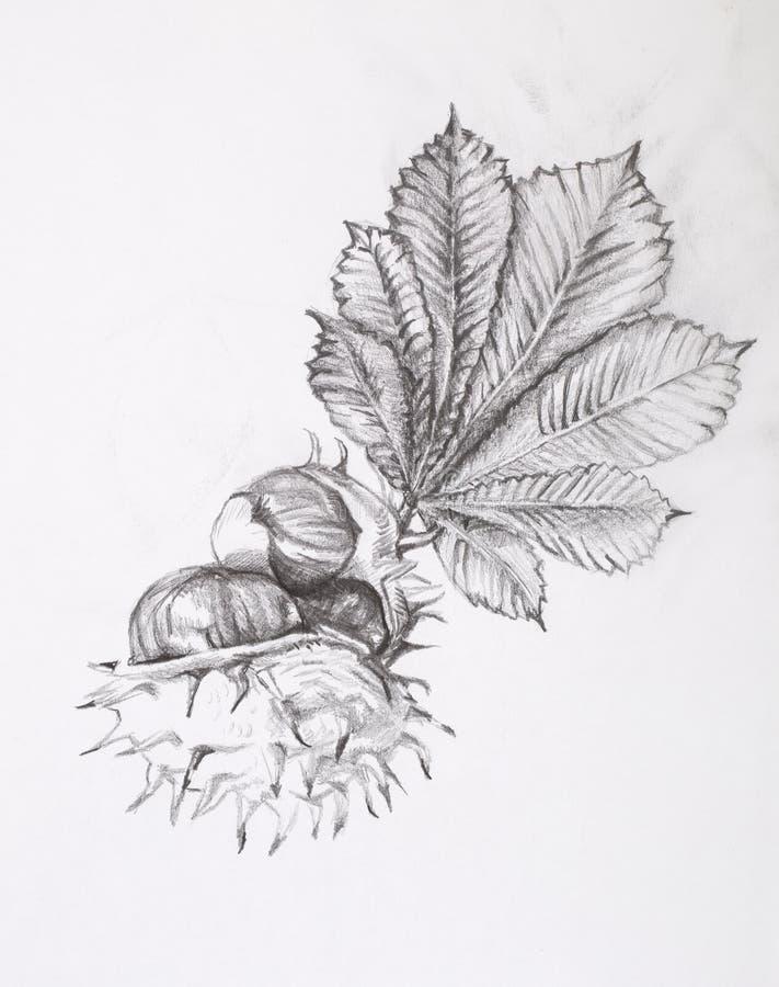 De tekening van het potlood Kastanje stock foto