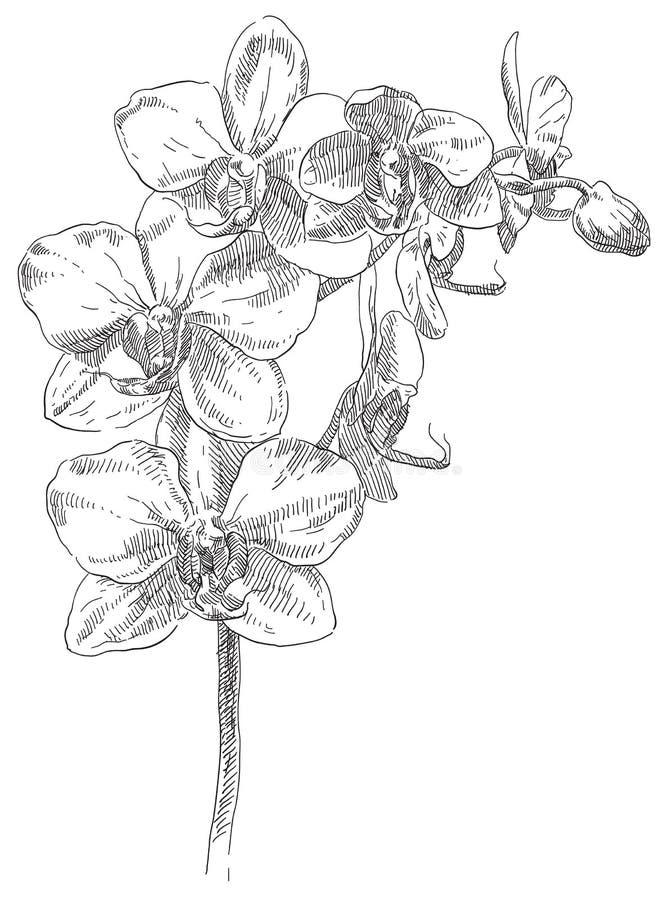 De tekeningsbloem van de hand vector illustratie