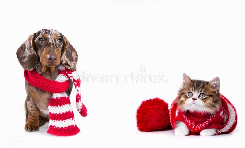 De tekkel en de kat van de Kerstmishond royalty-vrije stock afbeeldingen