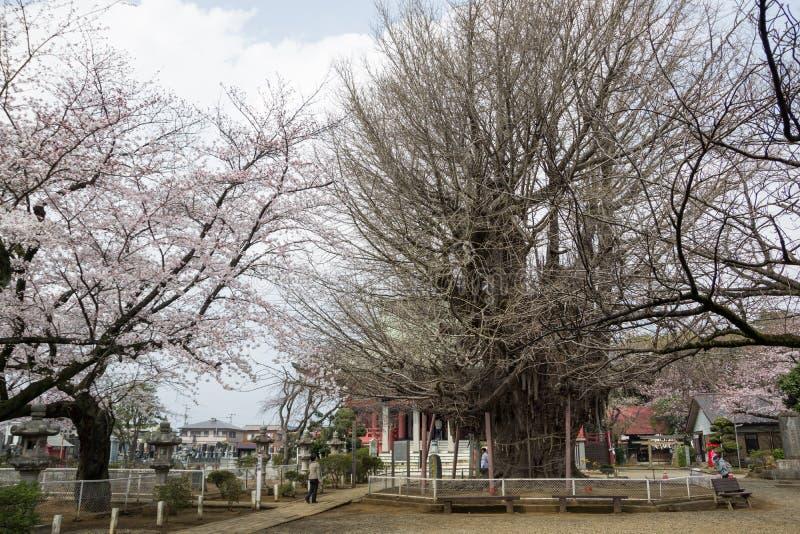 de Tempel van Chiba royalty-vrije stock afbeeldingen