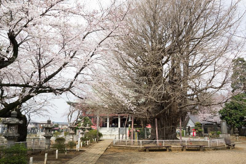 de Tempel van Chiba royalty-vrije stock fotografie
