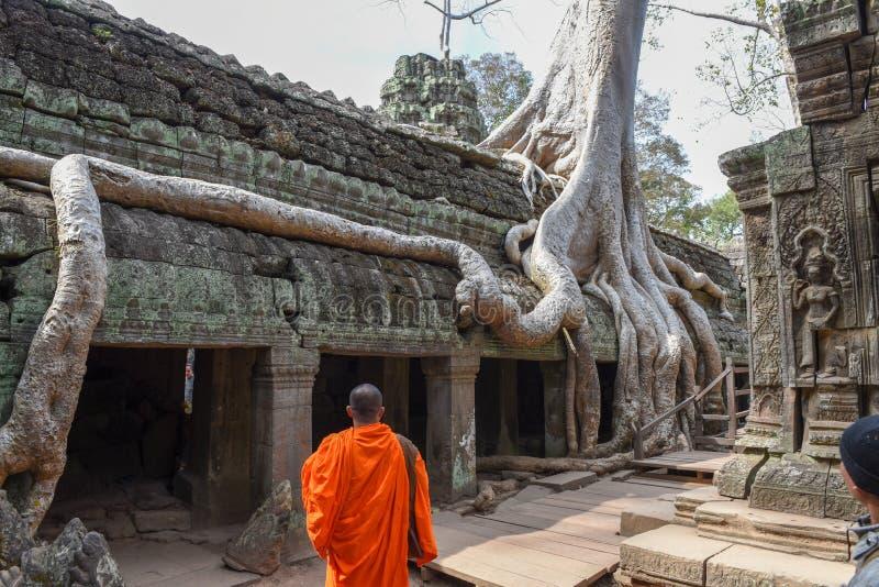 De tempel van Ta Prohm in Angkor complexe Wat, Siem oogst, Kambodja stock foto's