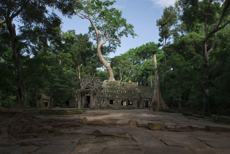 De tempel van Ta Prohm, boeddhistische Khmer tempel in Angkor Thom City van de 11de eeuw, in Angkor Wat complexe dichtbijgelegen  stock foto