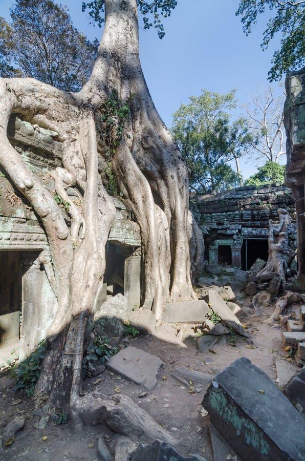 De tempel van Ta Prohm in Siem oogst royalty-vrije stock fotografie