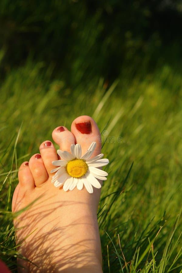 De tenen van de zomer royalty-vrije stock afbeelding