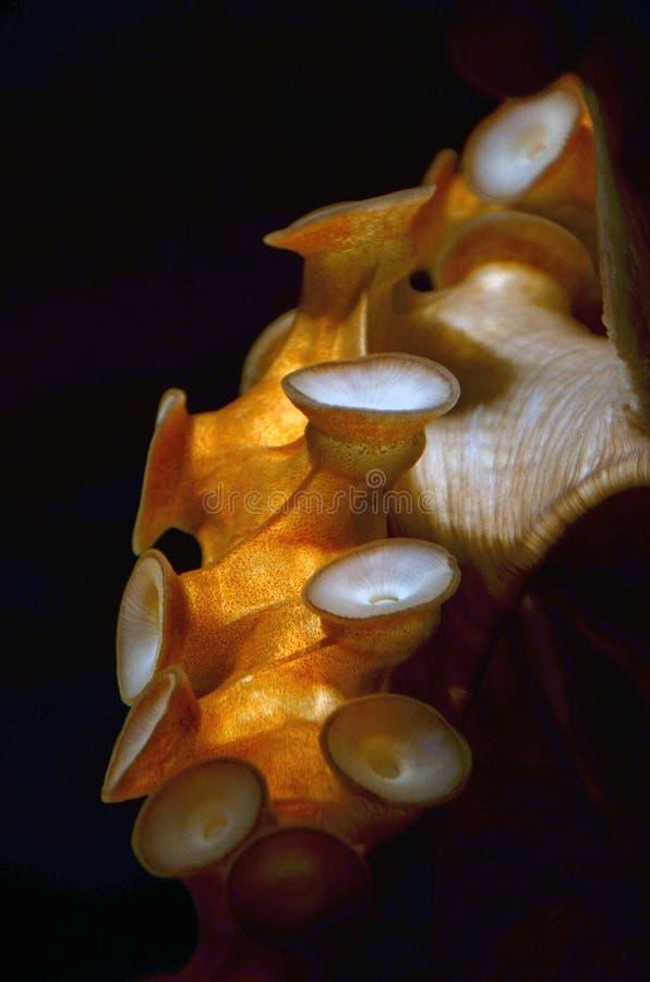 De Tentakel van de octopus stock fotografie