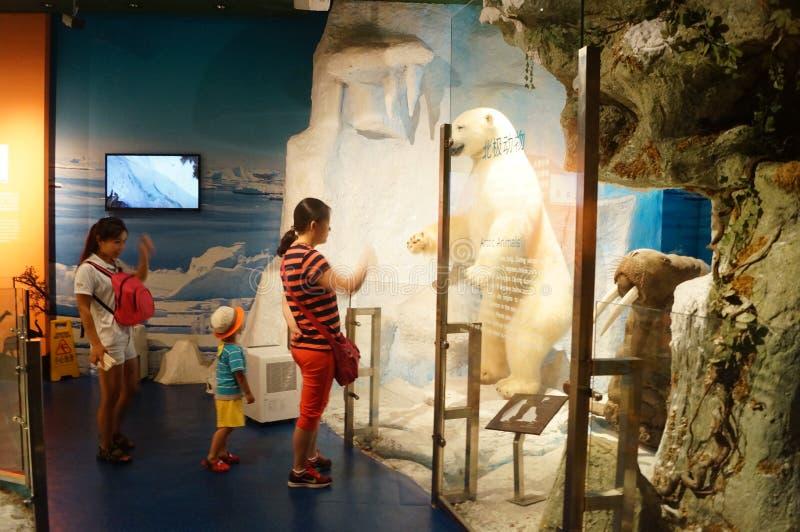 De tentoonstelling van wilde dierlijke specimens, mensen in het bezoek stock afbeelding