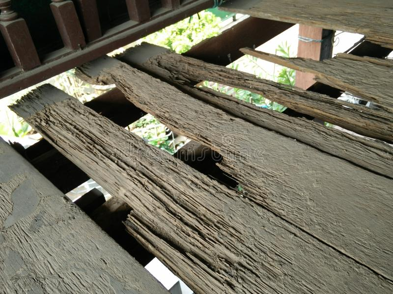 De termiet eet hout royalty-vrije stock afbeeldingen