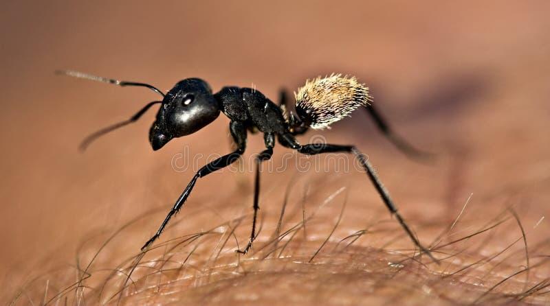 De termiet van de strijder royalty-vrije stock foto