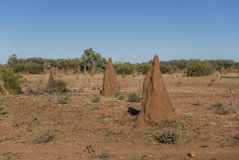 De termieten van de kathedraalhoop stock foto's