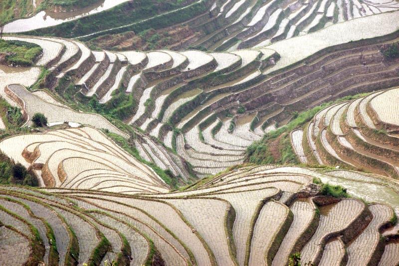 De terrassen van de Longjirijst, China stock afbeelding