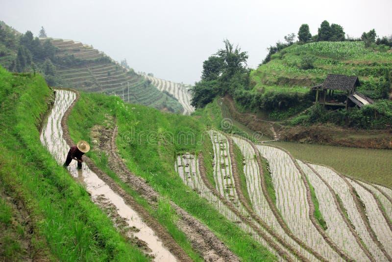 De terrassen van de Longjirijst, Guangxi-provincie, China royalty-vrije stock afbeeldingen
