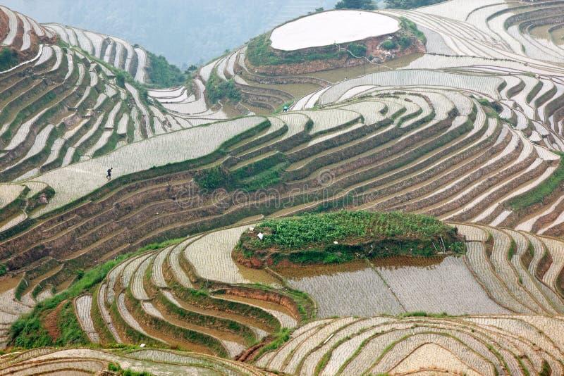 De terrassen van de Longjirijst, Guangxi-provincie, China stock foto's
