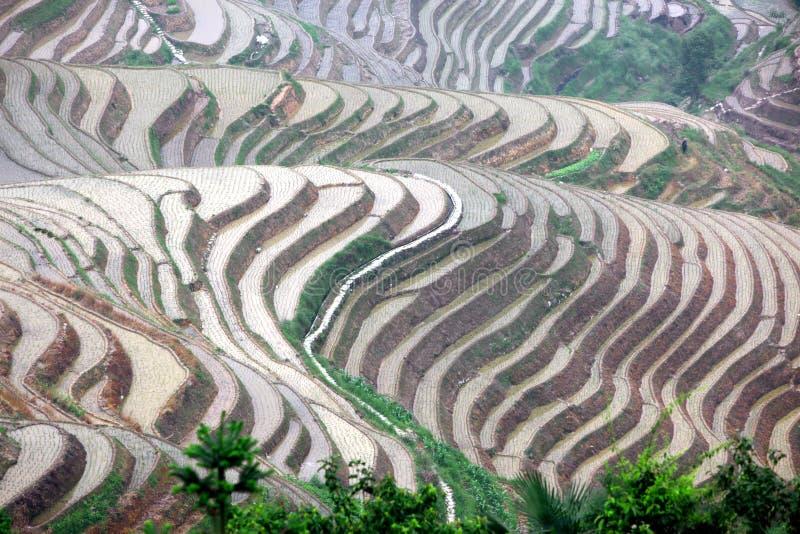 De terrassen van de Longjirijst, Guangxi-provincie, China stock afbeelding