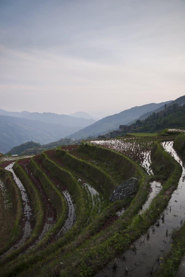 De terrassen van de Longshegrijst (China) bij zonsondergang royalty-vrije stock afbeelding