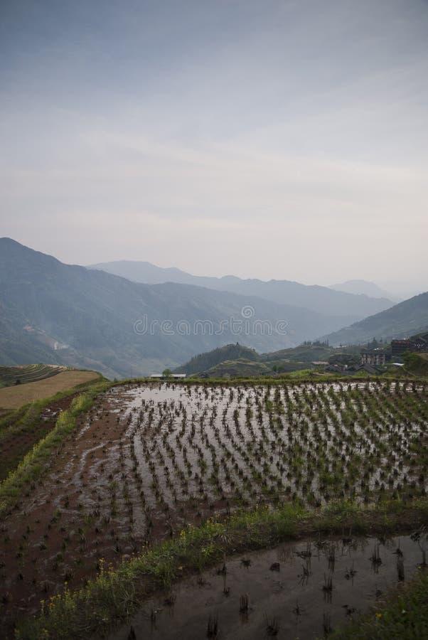 De terrassen van de Longshegrijst (China) bij zonsondergang stock afbeeldingen
