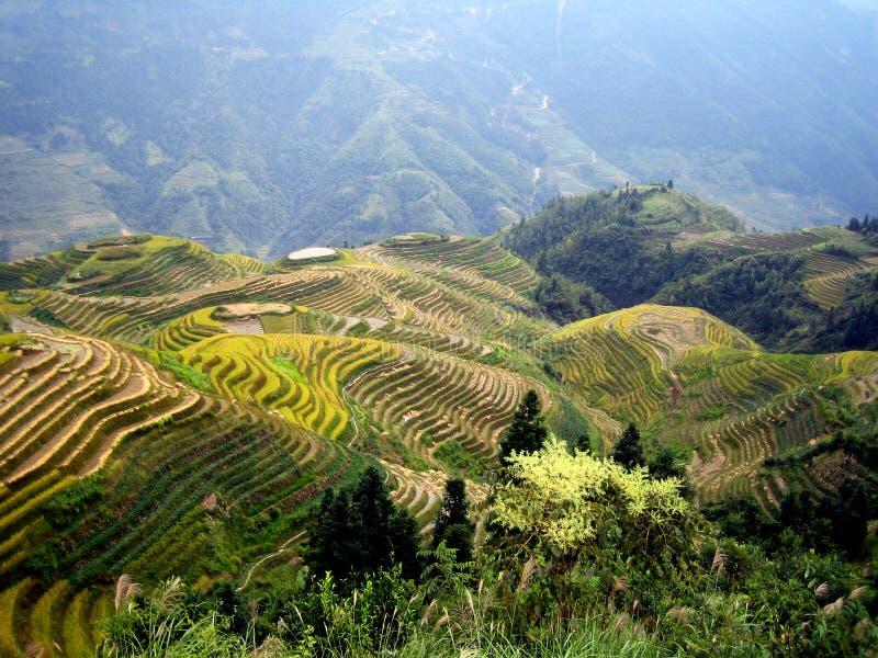 De terrassen van de rijst - Guilin - China stock foto