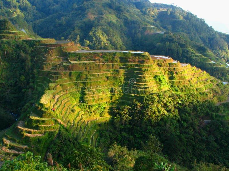 De Terrassen van de Rijst van Banaue stock fotografie