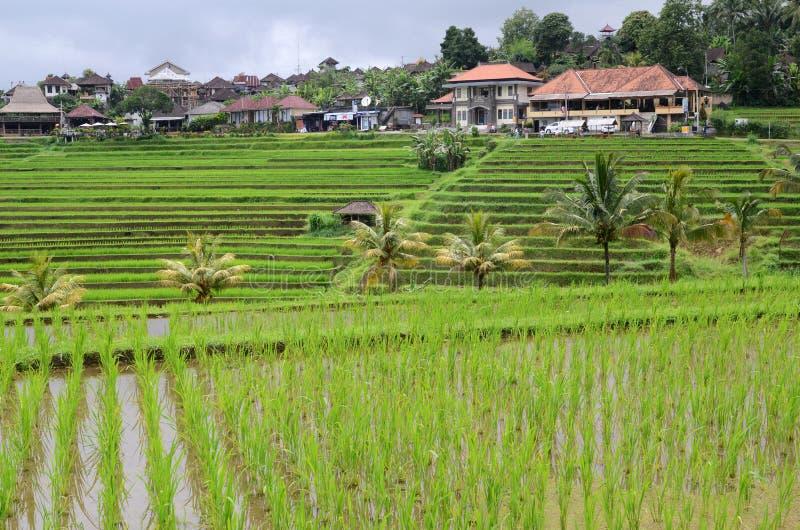 De terrassen van de Jatiluwihrijst in Tabanan, Bali, Indonesië stock afbeelding