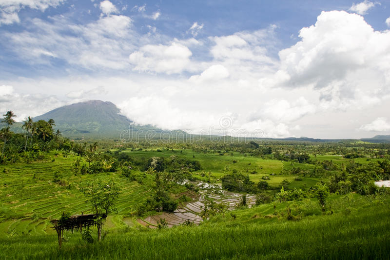 De terrassenpanorama van de rijst royalty-vrije stock fotografie