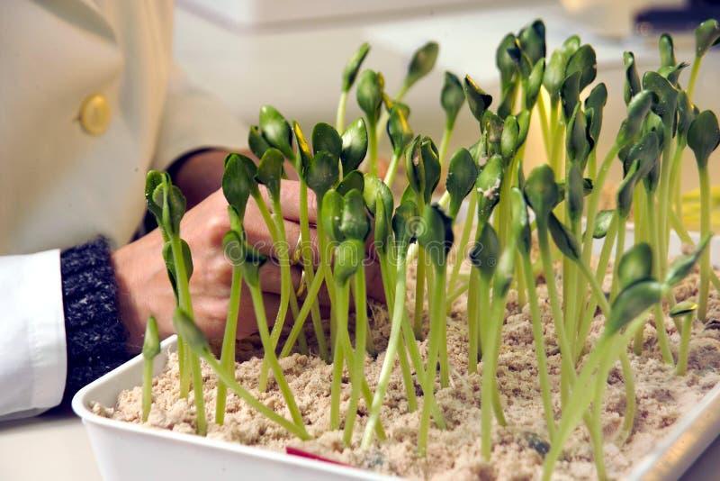 De test van de germinatie stock foto's