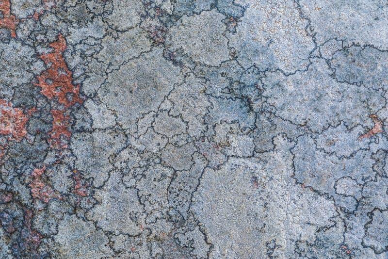 De textuur of de achtergrond van de oude die steenoppervlakte met het korstmos en het mos wordt behandeld stock foto