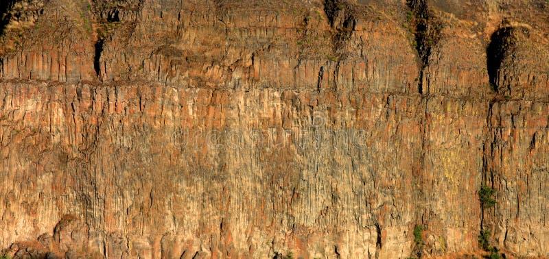 De textuur die van de rots op borsten lijkt stock afbeelding