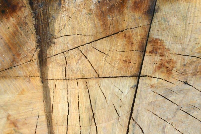 De textuur van de appelboom wordt verminderd - een dwarsdoorsnede van de boomstam met jaarringen en barsten stock fotografie