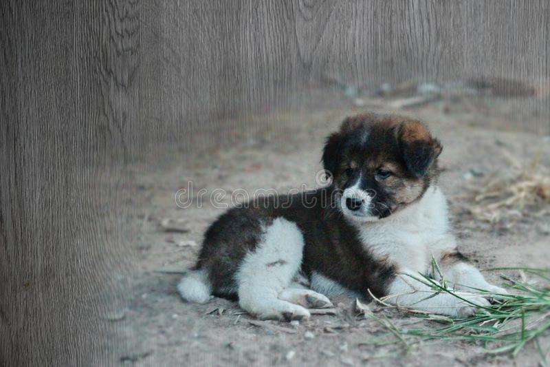 De textuur van bekledings mooi puppy ligt in openlucht bij land fie stock afbeeldingen