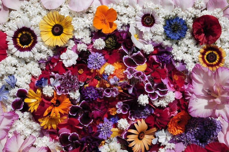De textuur van bloemen royalty-vrije stock foto