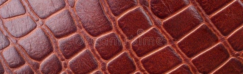 De textuur van de achtergrond krokodilhuid close-up royalty-vrije stock foto