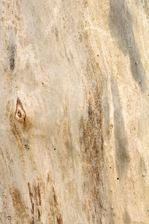 De Textuur Van De Barklessboom Stock Foto's