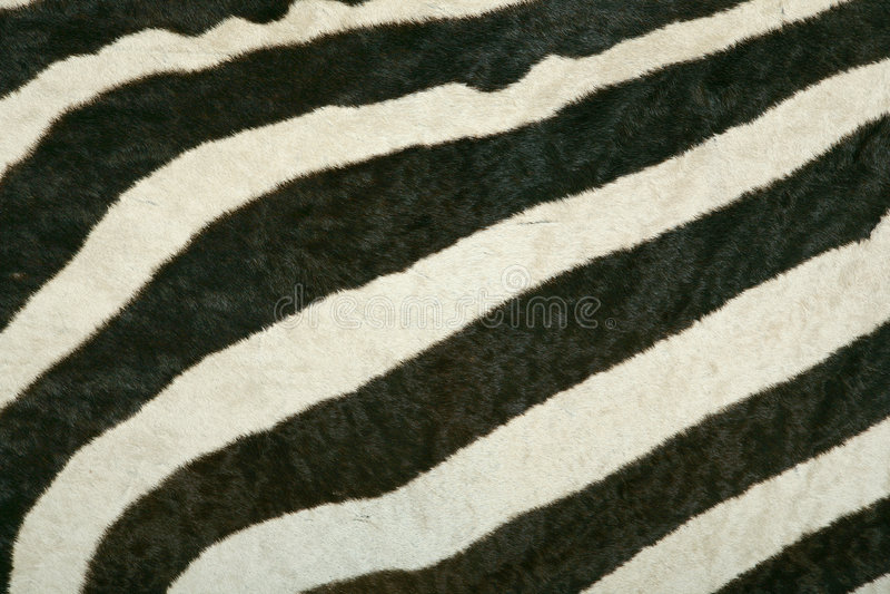 De textuur van de huid van de zebra van de Berg royalty-vrije stock foto's