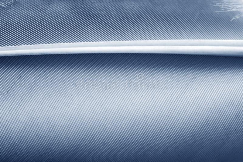 De textuur van de veer stock fotografie