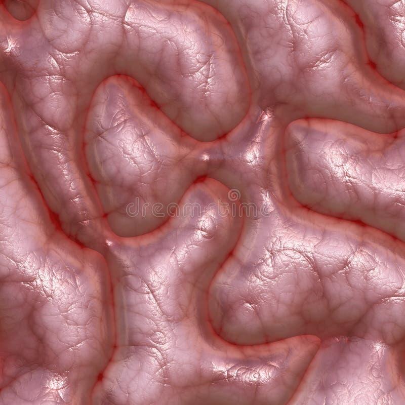 De textuur van hersenen royalty-vrije illustratie
