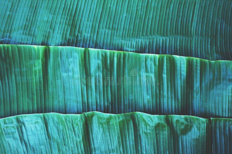 De textuur van het banaanblad, groen tropisch patroonconcept als achtergrond royalty-vrije stock foto's