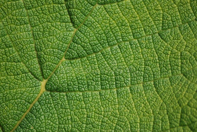 De textuur van het blad