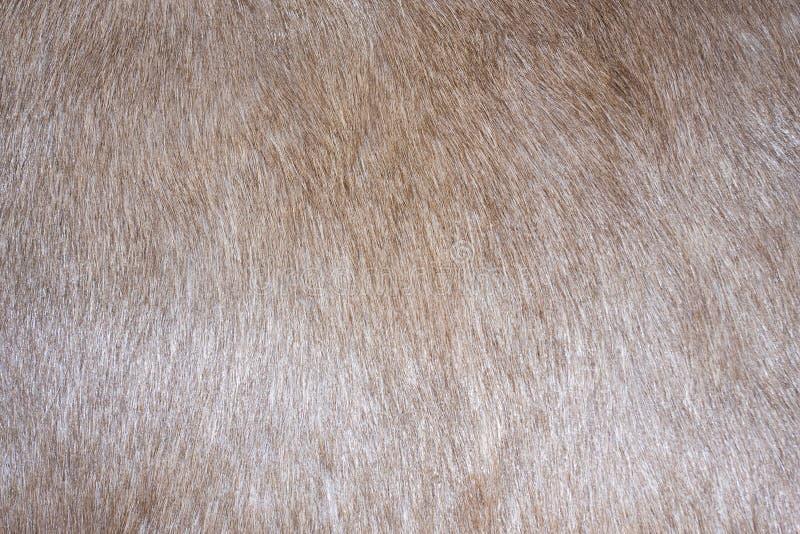 De textuur van het bont stock afbeelding