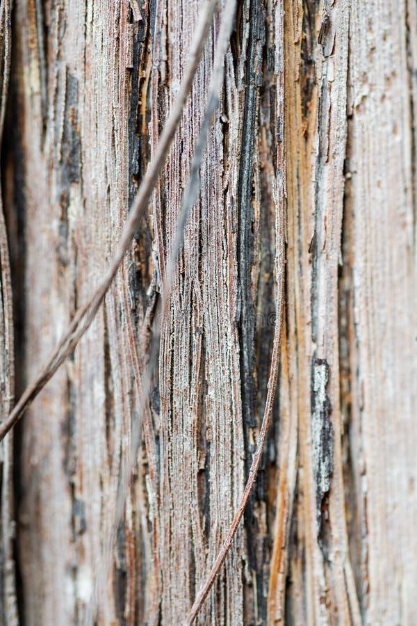 De textuur van het boomstam en schorsclose-up van druiven stock afbeelding