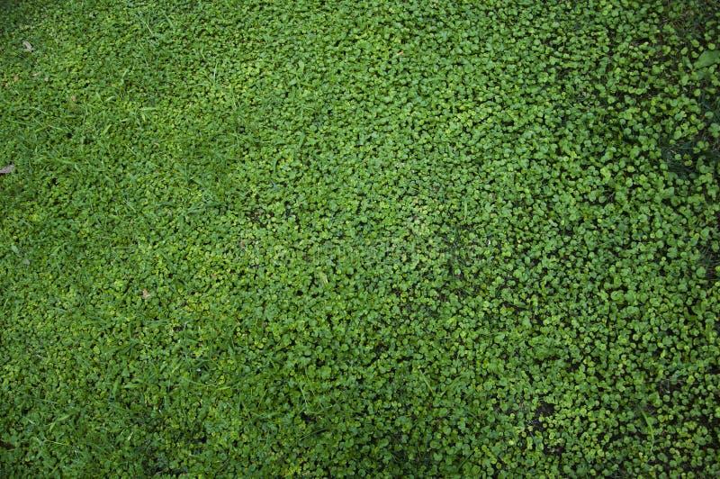 De textuur van het gras royalty-vrije stock foto's