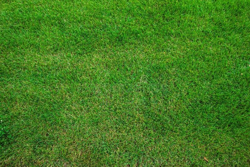 De textuur van het gras Snijd vers groene grasachtergrond Natuurlijk gras In orde gemaakt gazon royalty-vrije stock afbeelding