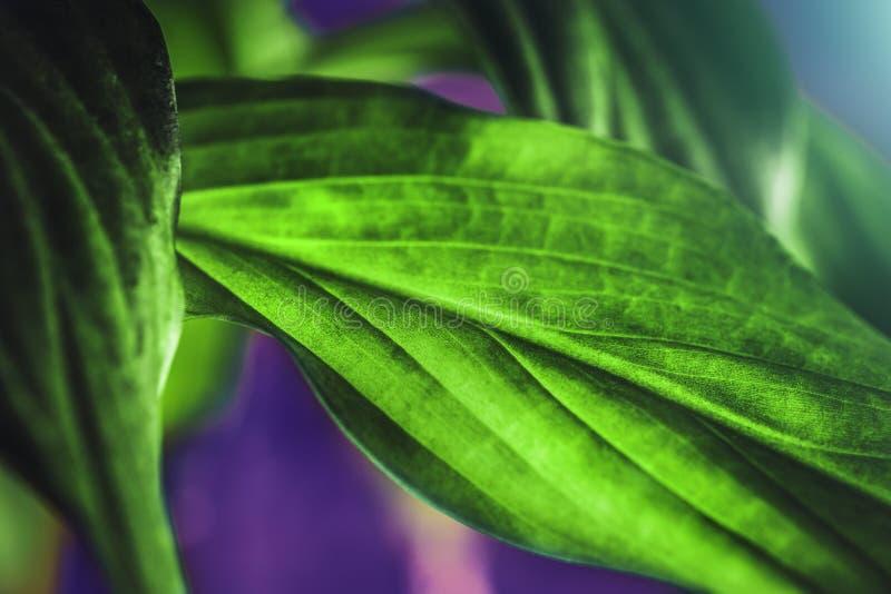 De textuur van het groene installatieblad, macroschot Aardachtergrond, de lenteflora stock afbeelding