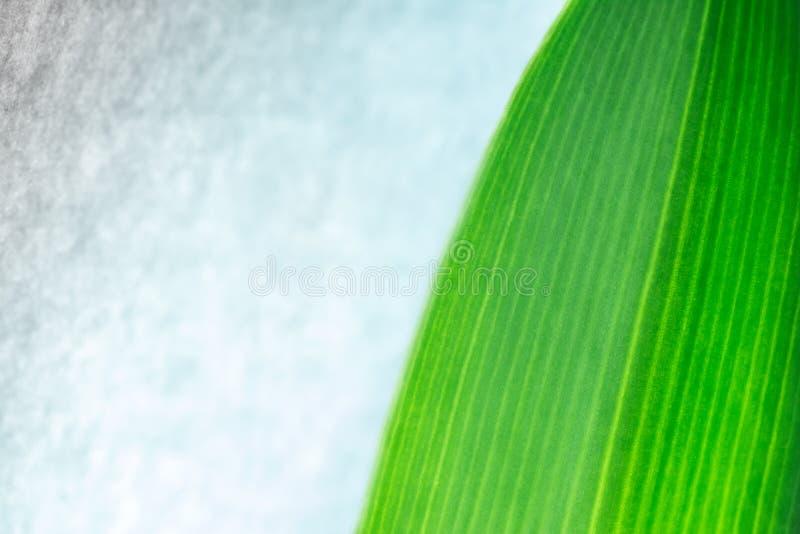 De textuur van het groene installatieblad op wijnoogst, grunge muur stock foto
