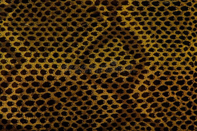 De Textuur van het Leer van de Huid van de slang stock foto