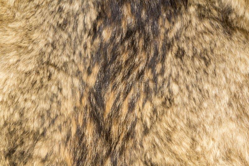 De textuur van het wolfsbont stock afbeeldingen